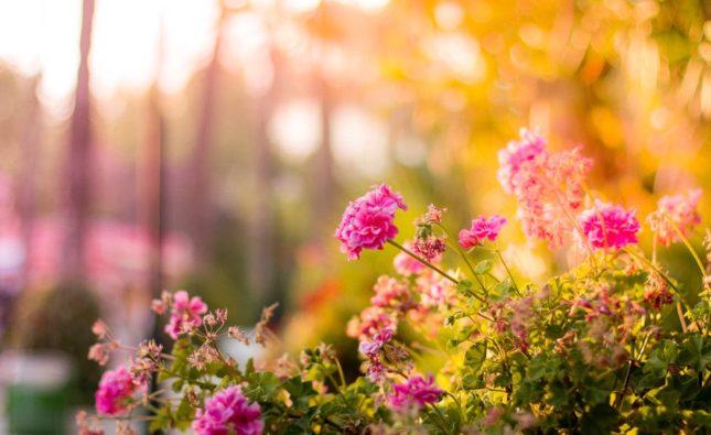 Bevattningssystem till trädgården